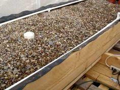 Earthworms aquaponics (vermiponics) experiment part 1 - YouTube