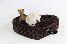 camas perros pequeños