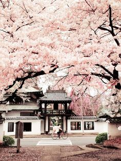 RE: Sendai 仙台, Miyagi prefecture 宮城県, Japan. Cherry Blossoms of Shouonji temple, Sendai, Miyagi, Beautiful World, Beautiful Places, Beautiful Pictures, Beautiful Moments, Places To Travel, Places To Visit, Travel Destinations