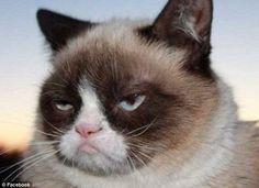 #GrumpyCat #photos