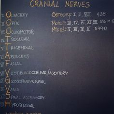 Cranial Nerves Nursing Board, Craniosacral Therapy, Biomedical Science, Cranial Nerves, Baby Massage, Sports Medicine, Veterinary Technician, Anatomy And Physiology, Nurse Life