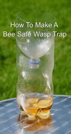 How To Make A Bee Safe Wasp Catcher