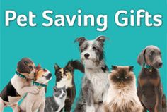 Dog Charities, Pet Life, Charity, Adoption, Range, Pets, Gift, Blog, Animals