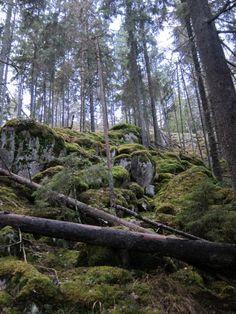 Nuuksio National Park in Espoo near Helsinki Finland Travel, Finland Tour, Lake Beach, Winter Travel, Helsinki, The Great Outdoors, Trekking, Great Places, Habitats