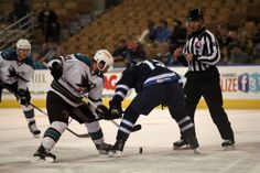 Worcester Sharks forward Travis Oleksuk battles for a face-off win (Feb. 22, 2014).