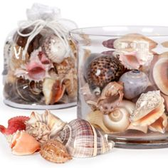Shell Gift Bag from Z Gallerie