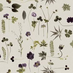 Pattern delicato, di fiori secchi e foglie, in verde e viola. Subtle pattern, dried flowers and leaves, in purple and green. Carta da parati/Wallpaper: Botanica 3661 from wallstore.se http://www.wallstore.se/startsida-i-51.aspx #vemverde #vemviola