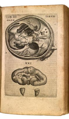 Lib. III. Tab. XIII. Theatrum anatomicum, 1605 (https://pinterest.com/pin/287386019949874427). Bauhin, Kaspar (1560-1624 https://www.pinterest.com/pin/287386019949818463/) with Theodor de Bry (https://www.pinterest.com/pin/287386019949610405).