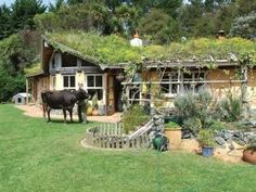 Living roof, living lawnmower in foreground