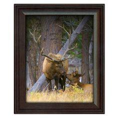 Personalized Elk Couple Art Print - Amazing Photograph