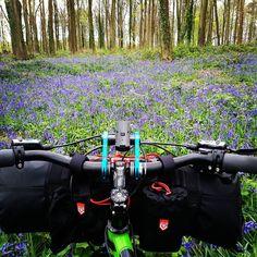 #bluebells in #angmeringparkestate  #triglavbikepacking #bikepacking #packmanharness #carryology