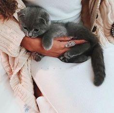 Hi i found pets favourite #petcare #petlove https://www.marshallspetzone.com/99-chewy-treats
