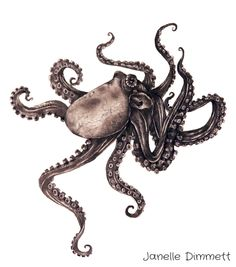 Octopus Drawing. (Illustration)  Traditional. Graphite Pencil.   Janelle Dimmett.