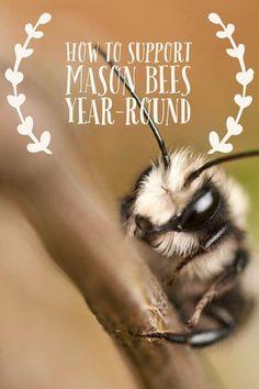 Mason bees are amazi