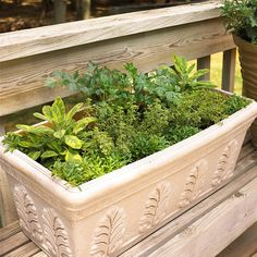 Make an Herbal Window Box        Let great scents waft in your home each time you open a window by growing herbs in your window boxes. This lovely example incorporates variegated sage, variegated thyme, Italian parsley, and sweet alyssum.