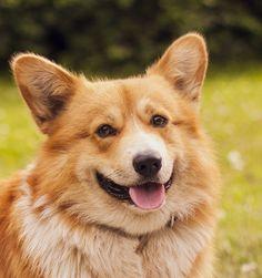 Dogsmile #2