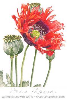 """Oriental Poppy © ~ annamasonart.com ~ 23 x 31 cm (9"""" x 12"""")"""