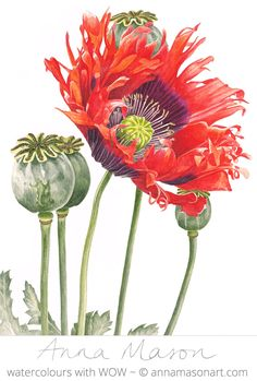 Just looking at these vibrant Oriental Poppies is warming me up!