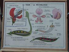 Ancienne carte affiche scolaire vidal lablache france villes n 5 ecole p - Carte murale scolaire ancienne ...