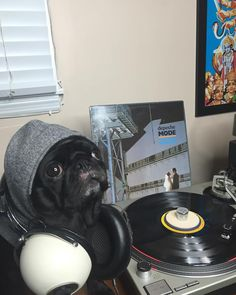 Happy Sunday ya'll! Indy is keeping warm on this muggy day trying to treat her chapped lips!  She has been going on so many adventures lately that it's finally catching up to her! Thanks for following guys! Make your final purchases so that we can ship before Christmas!  @depechemode #pugsandvinyl #indyrecordshop #indythepug #indyrecords #blackpug #pug#vinyl #nashvillevinyl#vinylsale #recordsale #vinyligclub…