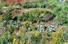permacultura dove l'orto e il giardino s'incontrano