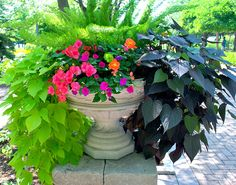 Color pop container filled with hot pink, orange, lime green flowers, potato vine and asparagus fern.
