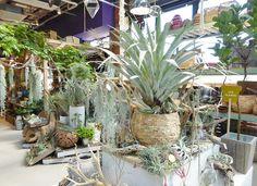 2015年4月に、西日本最大級のガーデンセンターとしてオープンした「the Farm UNIVERSAL(ザ・ファーム・ユニバーサル)」。 2016年3月18日(金)には、千葉のFRESPO稲毛内に関東最大規模の「the Farm UNIVERSAL」がオープンしました。 今回は、内覧会の様子をレポート... House Plants Decor, Plant Decor, Air Plants, Indoor Plants, Green Flowers, Flower Beds, Landscape, Garden, Floral