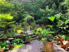 How to Avoid Damages Ponds Backyard, Backyard Landscaping, Landscaping Ideas, Plants That Repel Bugs, Sloped Garden, Backyard Paradise, Low Maintenance Garden, Small Ponds, Garden Spaces
