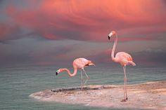 Pink flamingo (by baytowntexaslady)