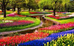 Parques de Tulipanes en Keukenhof, Leiden y Haarlem, Países Bajos.