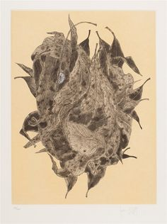 Fiona Hall _ Wattle and Mantid