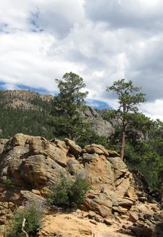 Rocky Mountain National Park - 2014 - taken by Pat Curtis. Please re-pin them, BUT they are NOT available for use in a commercial enterprise. That is a copyright violation