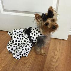 Polka Dots and Lace Dog Dress Customizable to by Rufflesforcharli