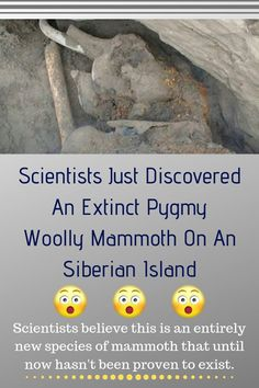 Scientists Just Discovered An Extinct Pygmy Woolly Mammoth On An Siberian Island Extinct Animals, Scientists, Island, Islands