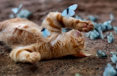 The ginger tom has collapsed on the ground among the butterflies after using up all his energy during playtime