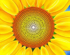 Beautiful sunflower of summer by Elspeth McLean  ...MANY MORE