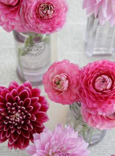 pink dahlias in glass jars