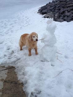 Golden Stealing the snowman's arm