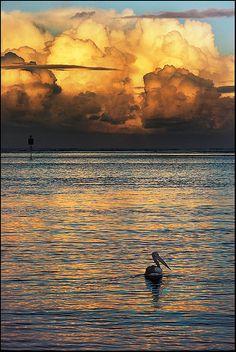Storm Clouds and a Pelican at Caloundra, Queensland Australia
