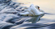 Adrian Borda (borda on DeviantArt) | The White Swan