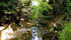 River Forest Menalon Trail Arcadia Greece