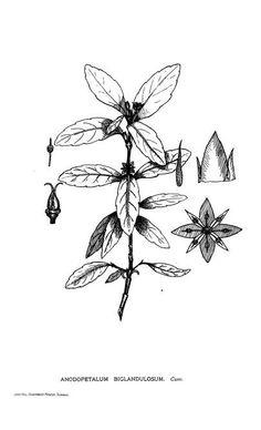 The Tasmanian flora. - Biodiversity Heritage Library