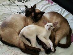 Beautiful Companions
