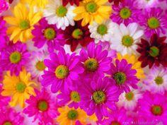 Rengarenk-çiçek-resmi.jpg (900×675)