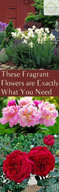 These Fragrant Flowers are Exactly What You Need - Bless My Weeds