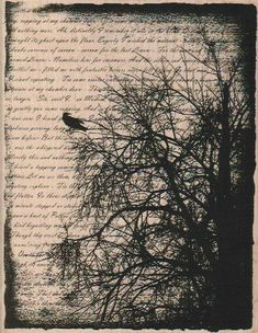 background  Rubber  Stamp Tree Writing Collage by pinkflamingo61, $18.75