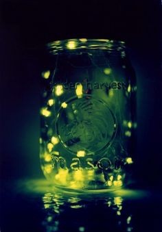 Because you're never too old to catch fireflies! I have no shame, I will be doing this this summer. :D