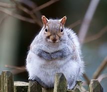 Inspiring picture squirrel, wildife, nature, nbw. Resolution: 931x1024 px. Find the picture to your taste!