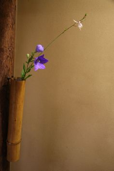 桔梗 白蝶草 弥栄子先生作 竹尺八