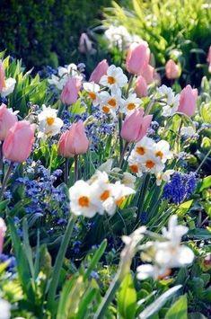 39 Start Spring Garden with flower Ideas